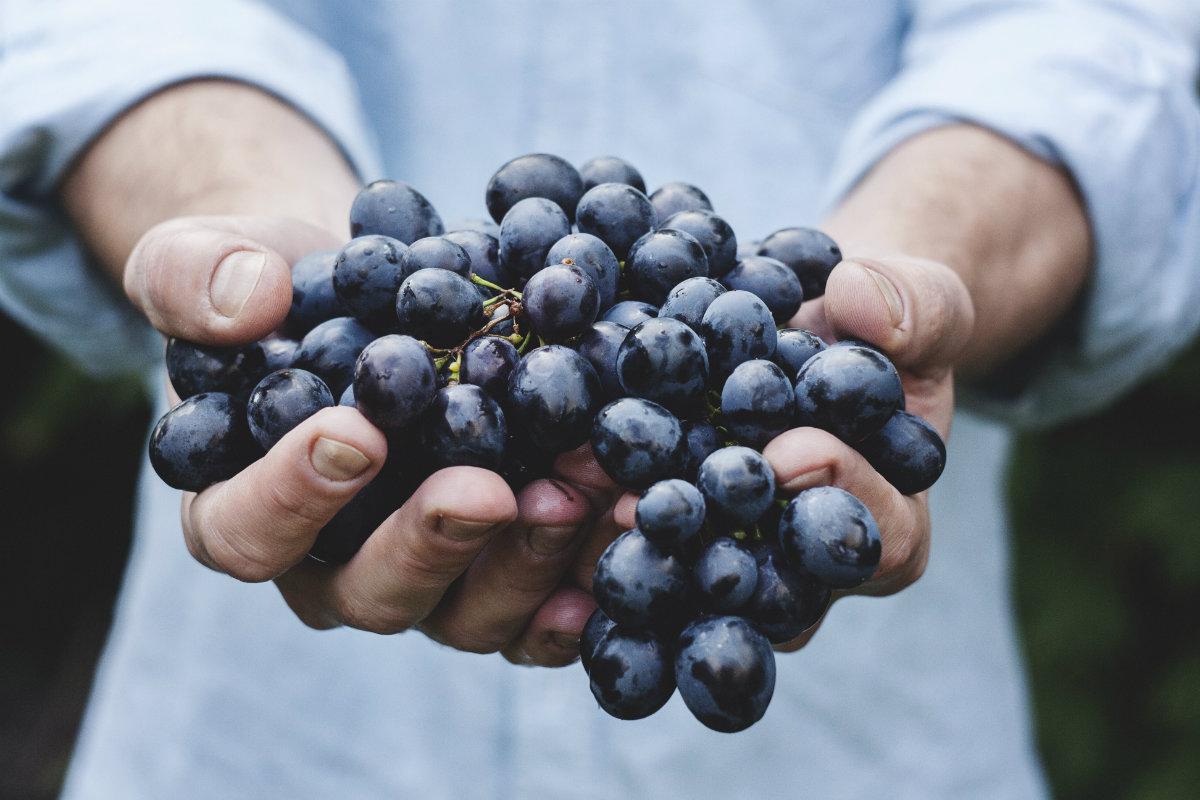 Bio Food: cosa interviene nel processo d'acquisto?